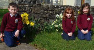 Daffodil Day 2017 DSC07642 (1)