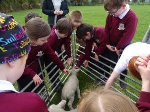 Lambs (13)