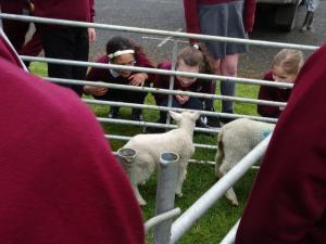Lambs (4)