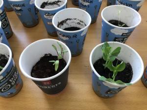 Sow & Grow Week 1 (2)