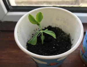 Sow & Grow Week 1 (4)