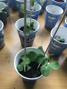Sow & Grow Week 2 (1)