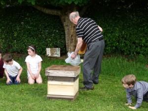 Bees DSC08827 (14)
