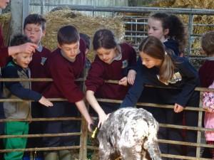 Dairy Farm Visit 2018 (22)