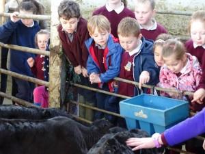 Dairy Farm Visit 2018 (29)