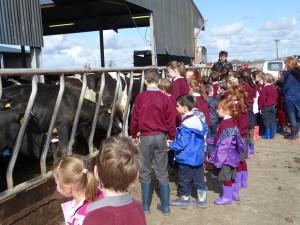 Dairy Farm Visit 2018 (3)