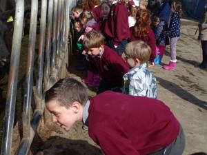 Dairy Farm Visit 2018 (5)
