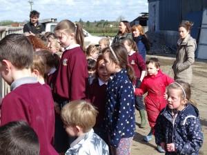 Dairy Farm Visit 2018 (6)