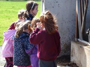 Dairy Farm Visit 2018 (7)