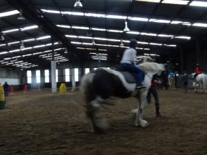 Horse Riding 2017 DSC09837 (103)