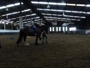 Horse Riding 2017 DSC09837 (104)