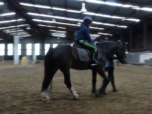 Horse Riding 2017 DSC09837 (106)