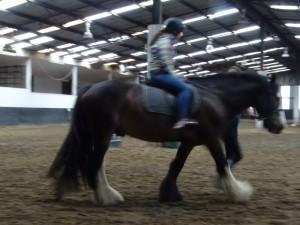Horse Riding 2017 DSC09837 (112)