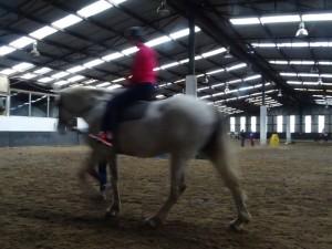 Horse Riding 2017 DSC09837 (122)