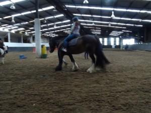 Horse Riding 2017 DSC09837 (127)