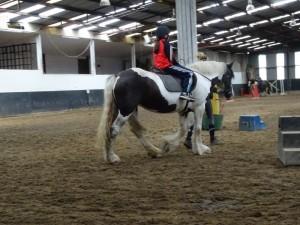 Horse Riding 2017 DSC09837 (97)