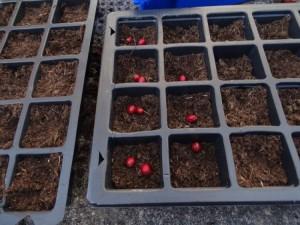 Seeds 2016 DSC04175