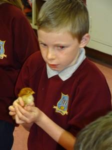 chicks last day (20)