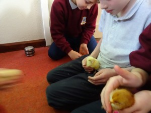 holding chicks (1)