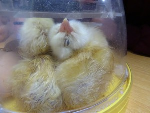 incubator (5)